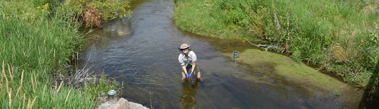 ppcp sampling in East Canyon Creek, Utah