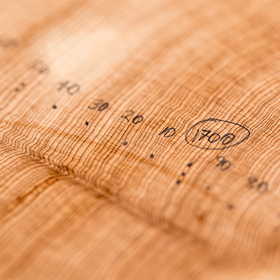 tree rings with reference years marked