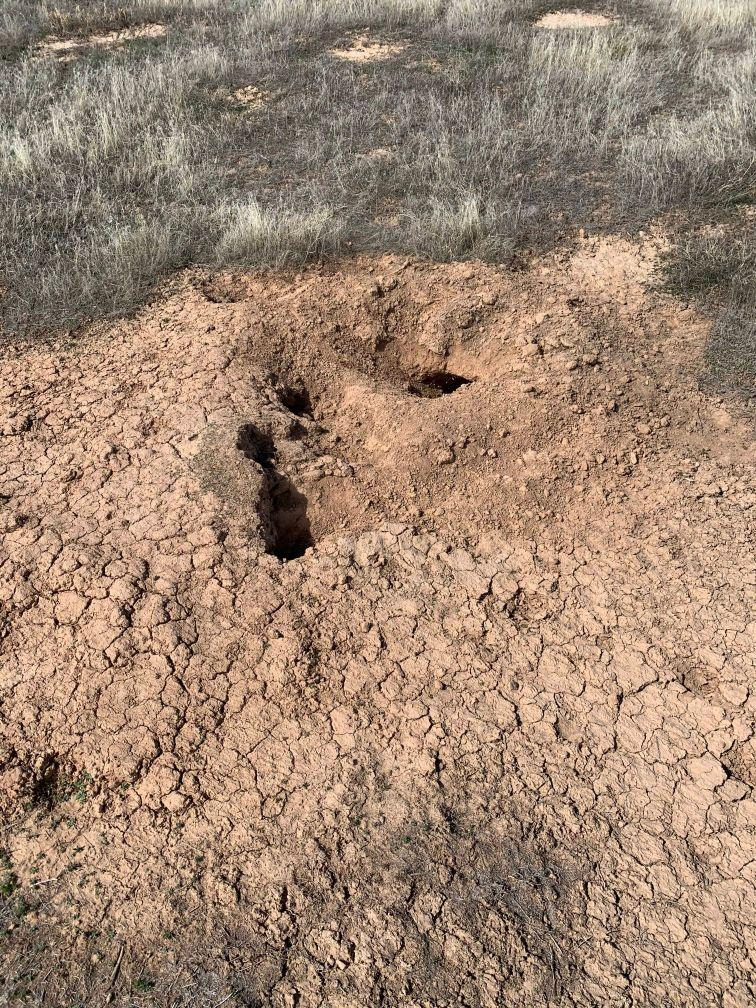 An opening to a White-Tailed Prairie Dog Burrow.