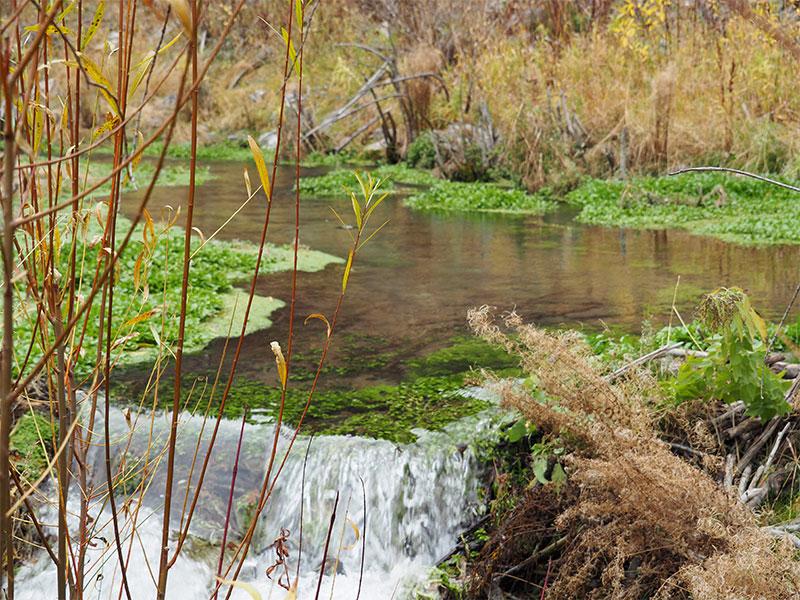 A stream in Alaska